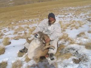 Sergei Shushunov Tian Shan argali hunt